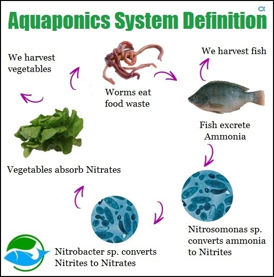 what is aquaponics system aquaponics system reviews